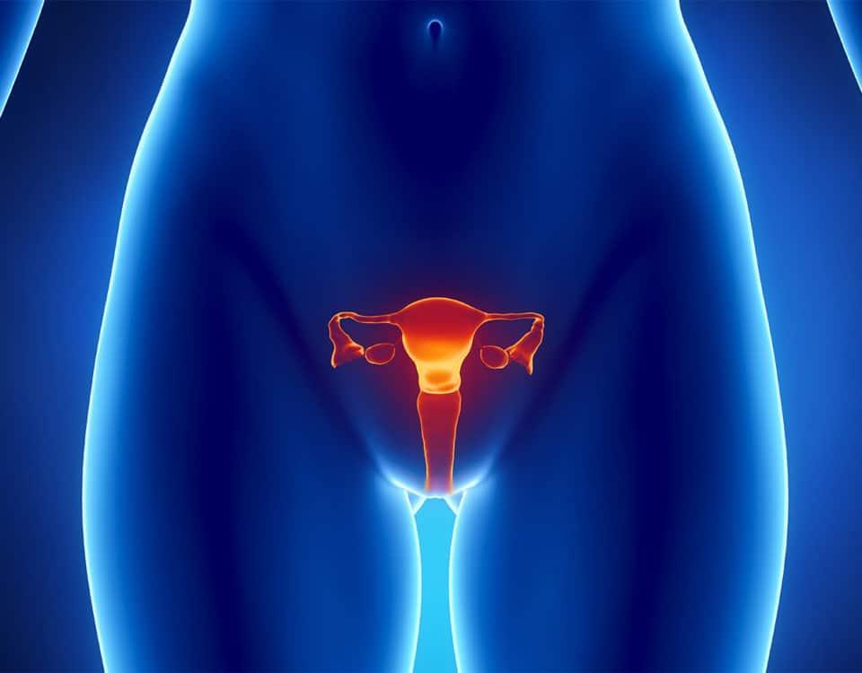 Gebärmutter / Schema