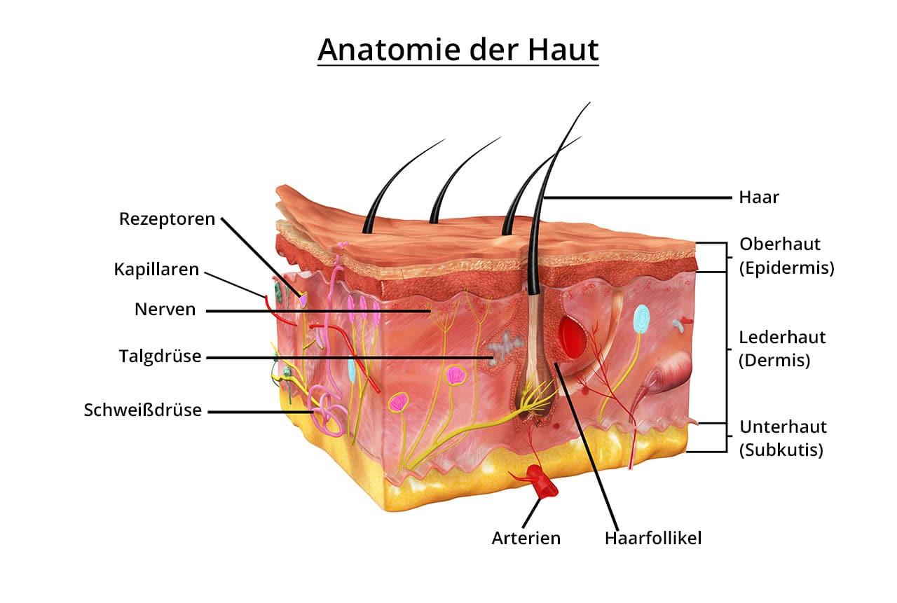 Dermabrasion: für ein besseres Erscheinungsbild der Haut - Operation.net